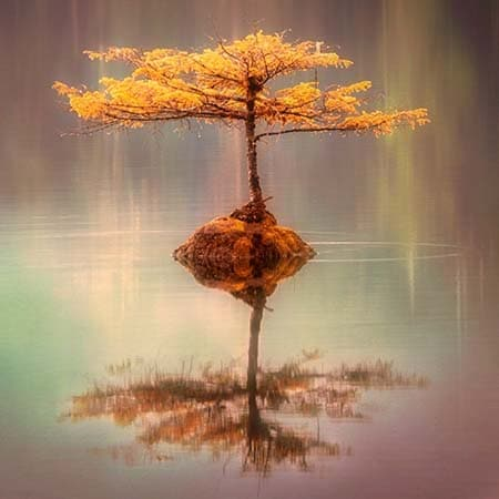 Image Hypnose arbre Célia Cukier Issy les Moulineaux
